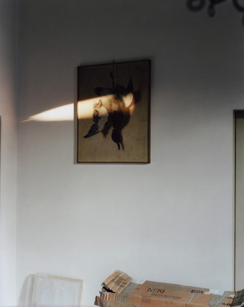 Painted Mallard, Faenza 9.02.2011